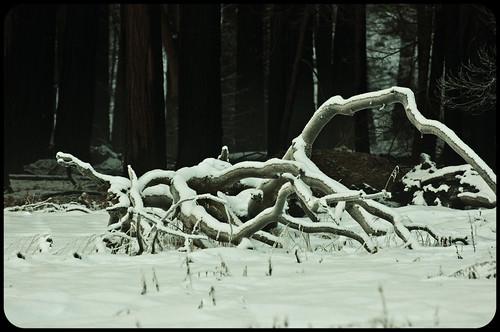 Yosemite-1-22