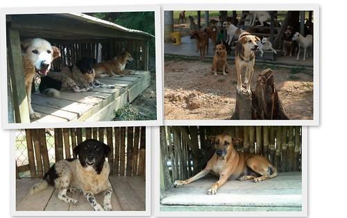 Noahs Ark Dogs