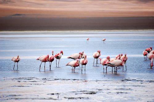 Flamingos at the Pink Lake