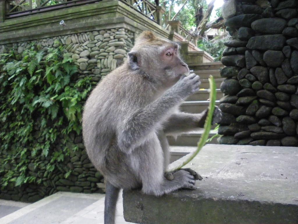 Sacred monkey forest, Bali - IMGP3081