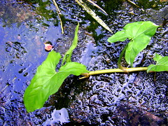 slime n plants.JPG by CarnegieMellonQatar