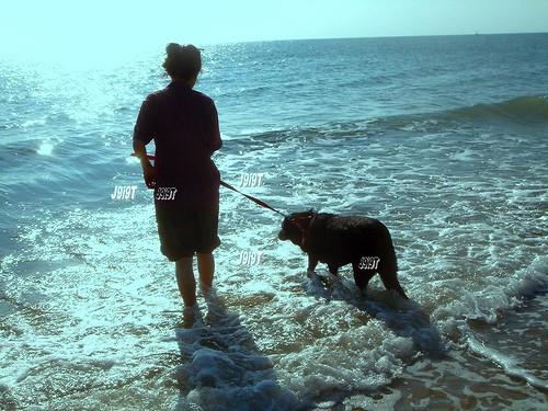 WP Thai Sea