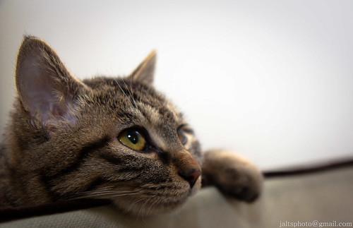 Kitten Glam 03