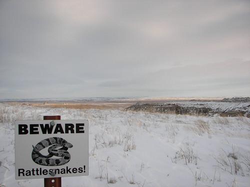 Beware: Rattlesnakes