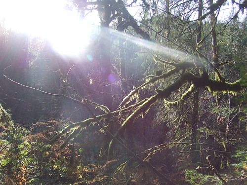 Sun Flare Through the Trees