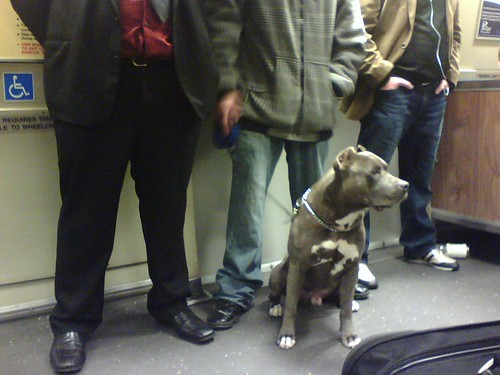 Dog on BART