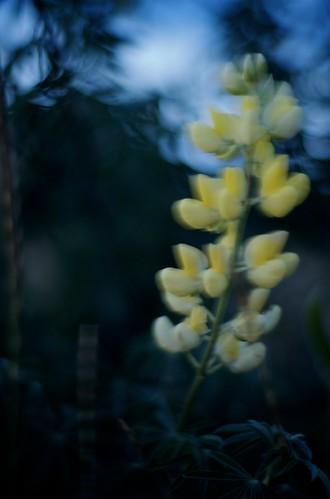 Windy Flowers