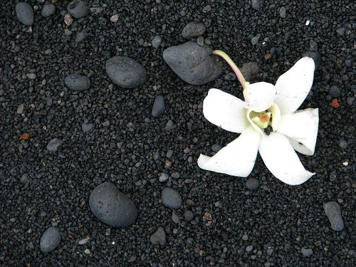 White flower, black sand