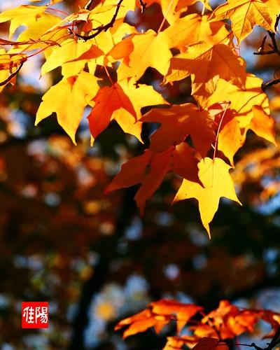 LeicaIIIf_Orf-MitsMXIII400_AutumnLeaves01