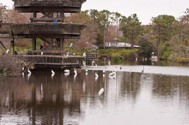 Gatorland breeding marsh and bird rookery