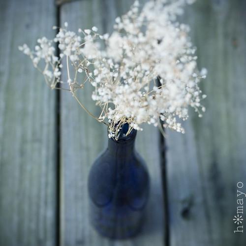 floraldream1
