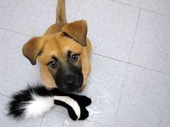 Emily brings back the skunk