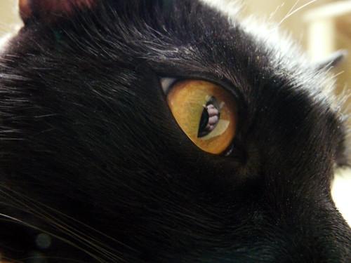 eye/r