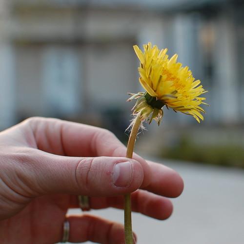 102.365 weeds