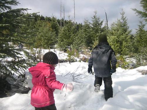 Tree Hunting 2009