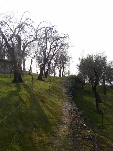 oliveto cassone