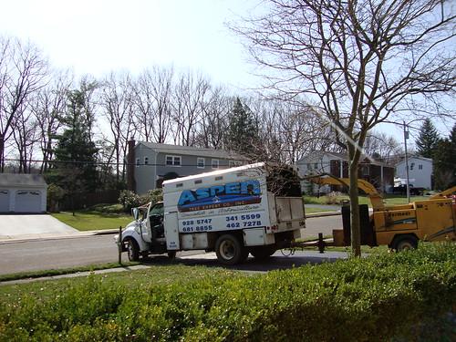 Aspen Tree Service