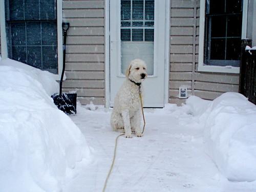 Durbin's Snow Day