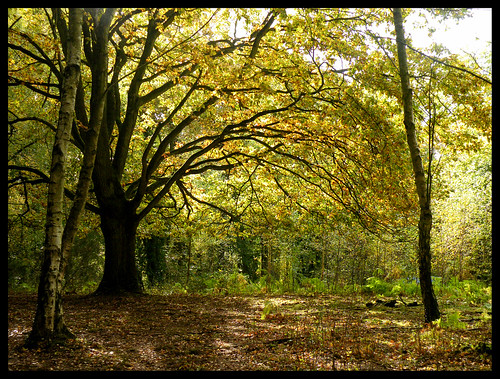 Queenswood, green glade