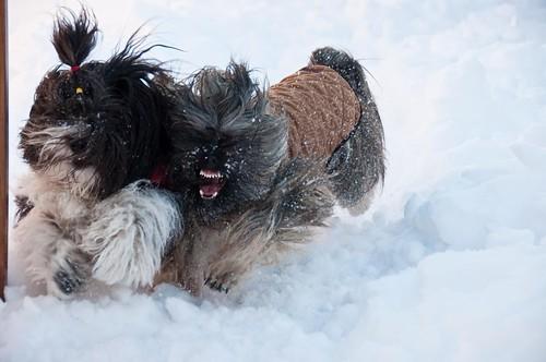 Snowday Fun