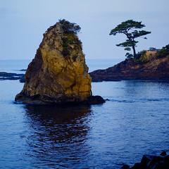 ocean, rock, tree, sky