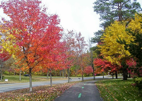 Colorful Path - Big Creek Parkway