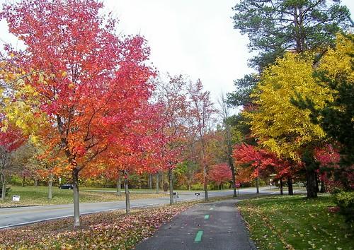 Colorful Path - Big Creek Parkway