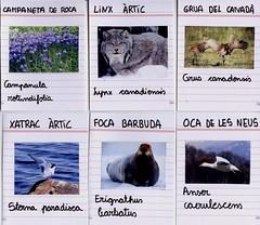 flora_fauna_biomes freds_5