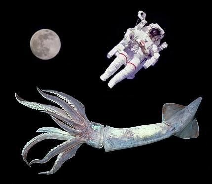 Squid in Space!