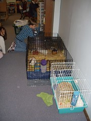 Our Guinea Pig Zoo