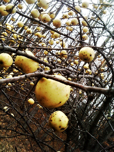 Photo Friday:  the applesteroid belt by farlane
