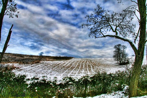 The Fields of Winter