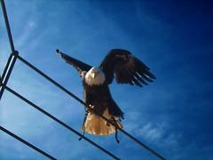 Aterrizando majestuosa