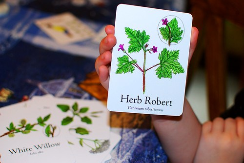 Wildcraft Herbal Board Game