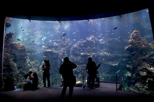 Lot of Fish