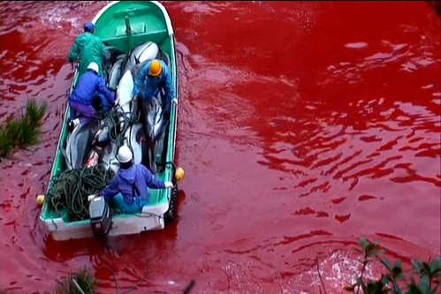 Stop Japs from slaughtering dolphin