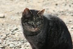 氷取沢市民の森の猫(Cat at Hitorizawa civic forest, Japan)