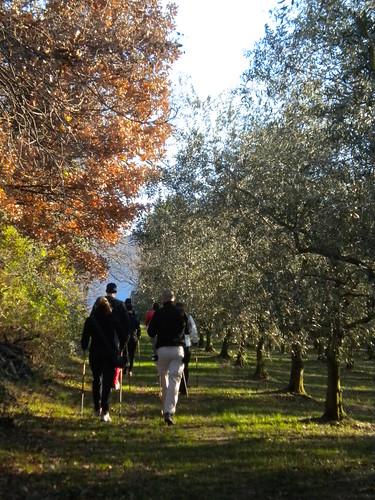 nell'oliveto
