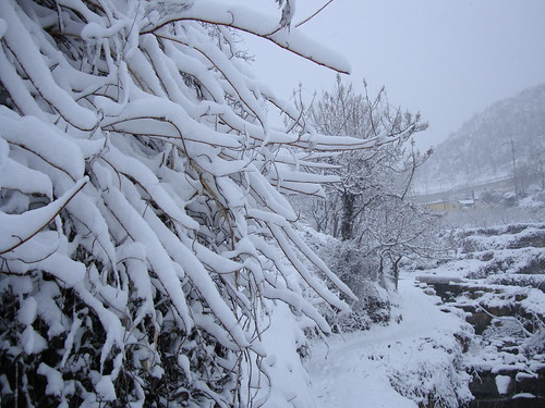 Schnee VI