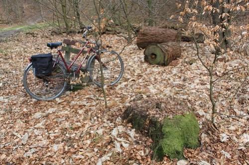 Frieda in the Woods