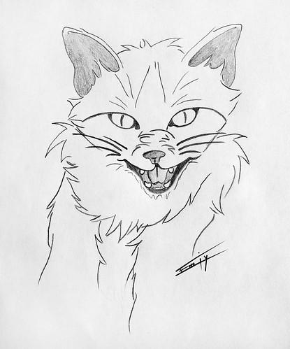 Haloween's cat