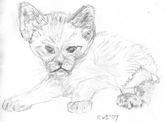 Drawing kittens, part 8