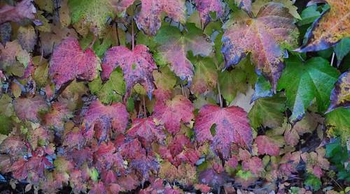 Leaves, by Alex Zucker