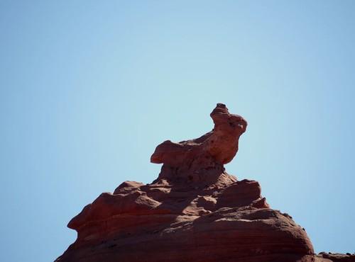 El conejo (by morrissey)