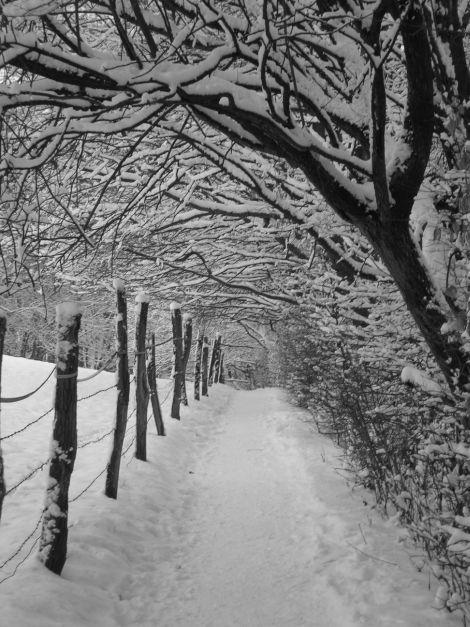 snow8_blog