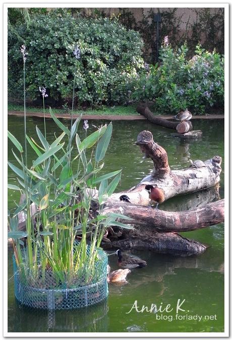 九龍公園水鳥