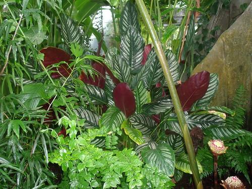 20090919 Edinburgh 20 Royal Botanic Garden 430