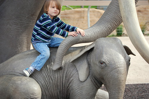at least the elephant is looking at the camera