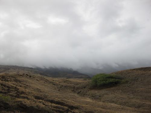 Bleak Hills