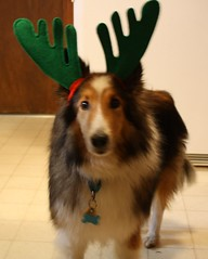 Casey the Reindeer